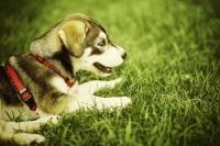venčení psů - kontakt 2