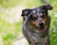 Venčení psů praha - služby 2