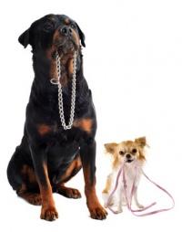 venčení psů Praha - spokojení klienti