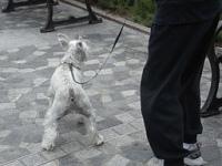 Venčení psů Praha 1