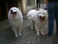 Venčení psů Praha 8